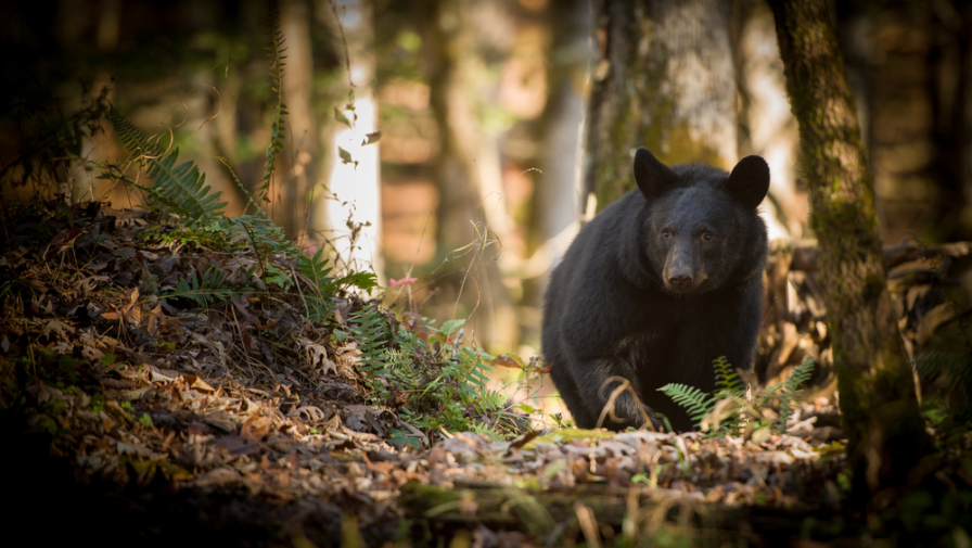 Find Out Which Wildlife You're Most Likely to See in Cades Cove this Summer