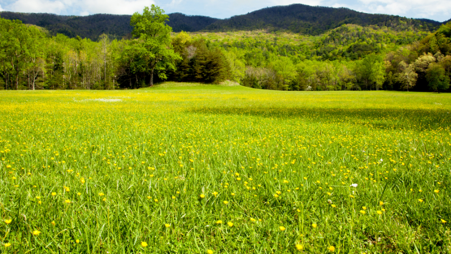 6 Amazing Things To Do in Cades Cove TN You Don't Want To Miss