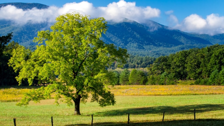 Uncovering the History of Cades Cove: The Pearl Harbor Tree